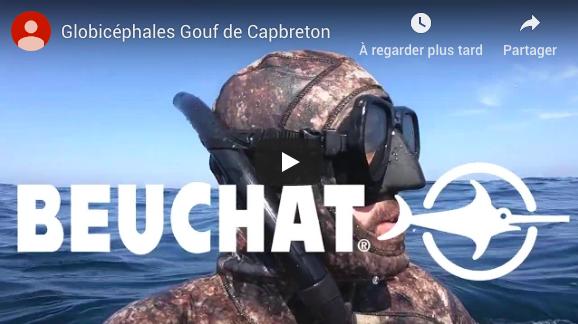 Globicéphales Gouf de Capbreton